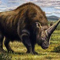 Современные люди возникли как вымершие древние «сибирские единороги», но их гибель не была нашей ошибкой