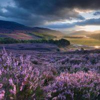 Почему Единорог жив, здоров и в Шотландии