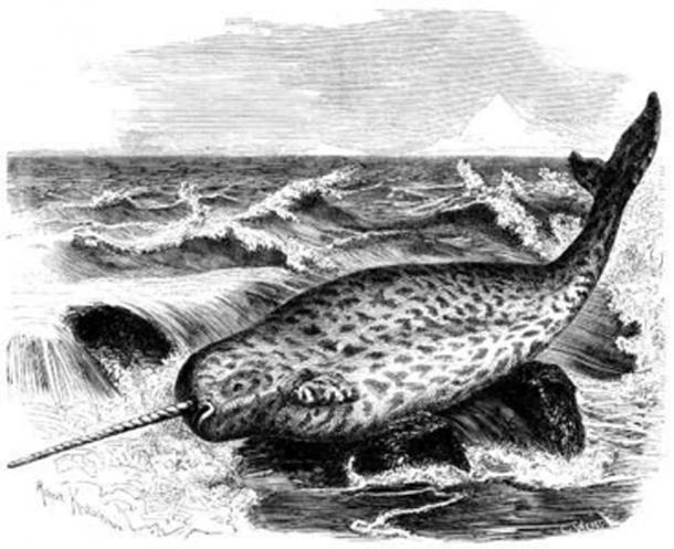 кит нарвал море рисунок